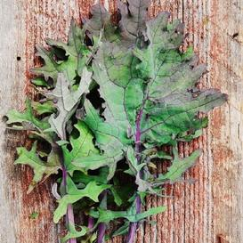 Kale Seeds (Organic) - Red Russian