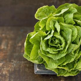 Lettuce Seeds (Organic) - Buttercrunch