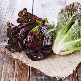 Lettuce Seeds - Red Romaine