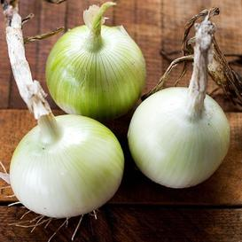 Onion Seeds (Short Day) - White Grano