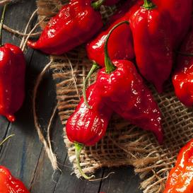 Hot Pepper Seeds - Bhut Jolokia / Ghost