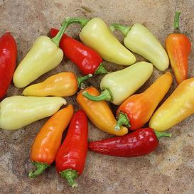 Hot Pepper Seeds - Santa Fe Grande