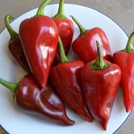 Sweet Pepper Seeds - Piquillo