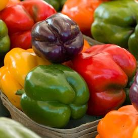 Sweet Pepper Seeds - Rainbow Bell Blend