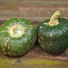 Squash (Winter) Seeds - Burgess Buttercup