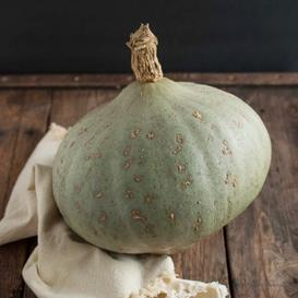 Squash (Winter) Seeds - Sweet Meat