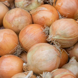 Onion Seeds (Organic) - Yellow Sweet Spanish