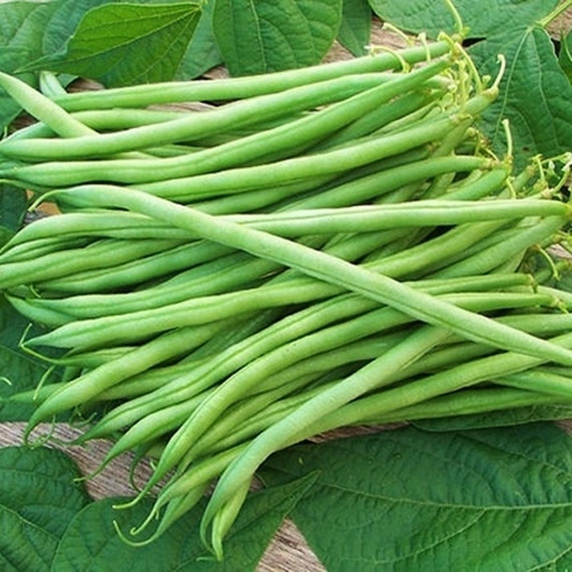 Bean Seeds (Bush) - Landreth Stringless
