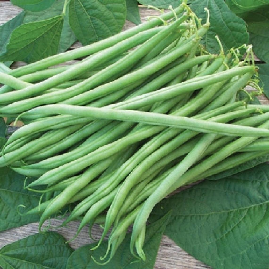 Bean Seeds (Bush) - Tenderette