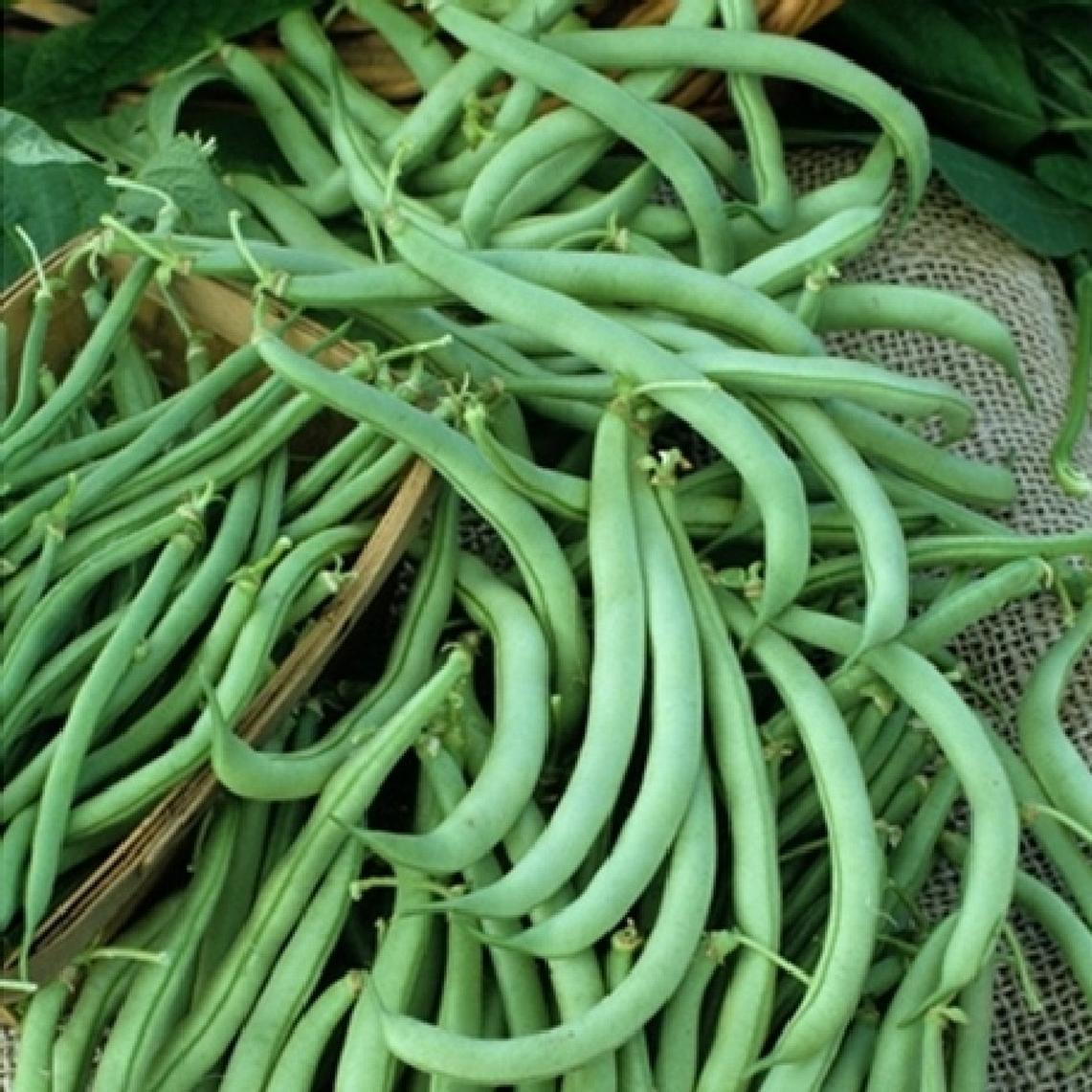 Bean Seeds (Bush) - Tendergreen