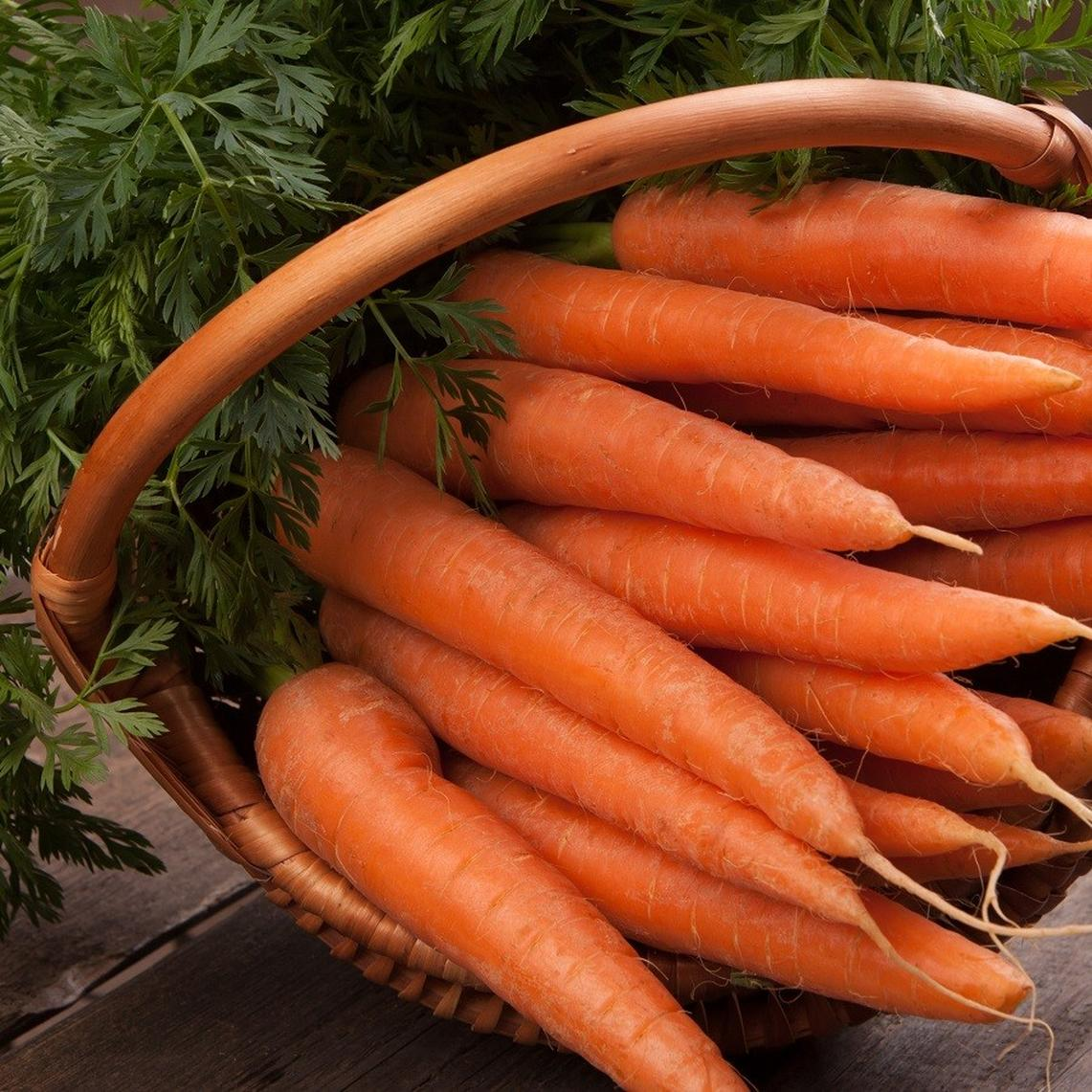 Carrot Seeds - Danvers 126