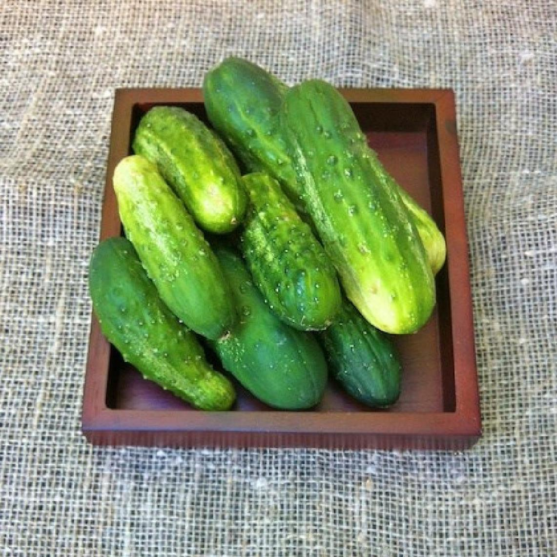 Cucumber Seeds (Pickling) - National Pickling