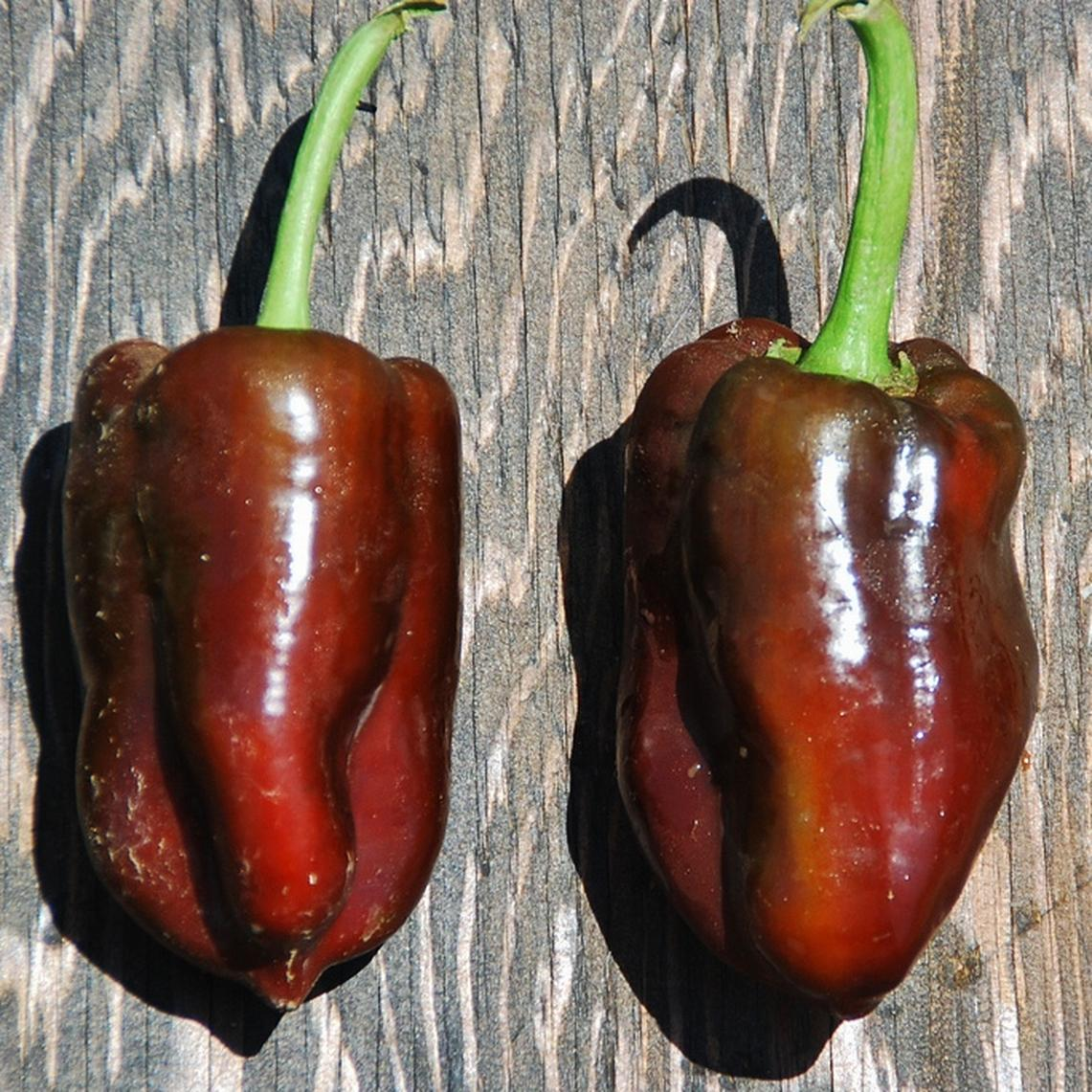 Sweet Pepper Seeds - Chocolate Bell