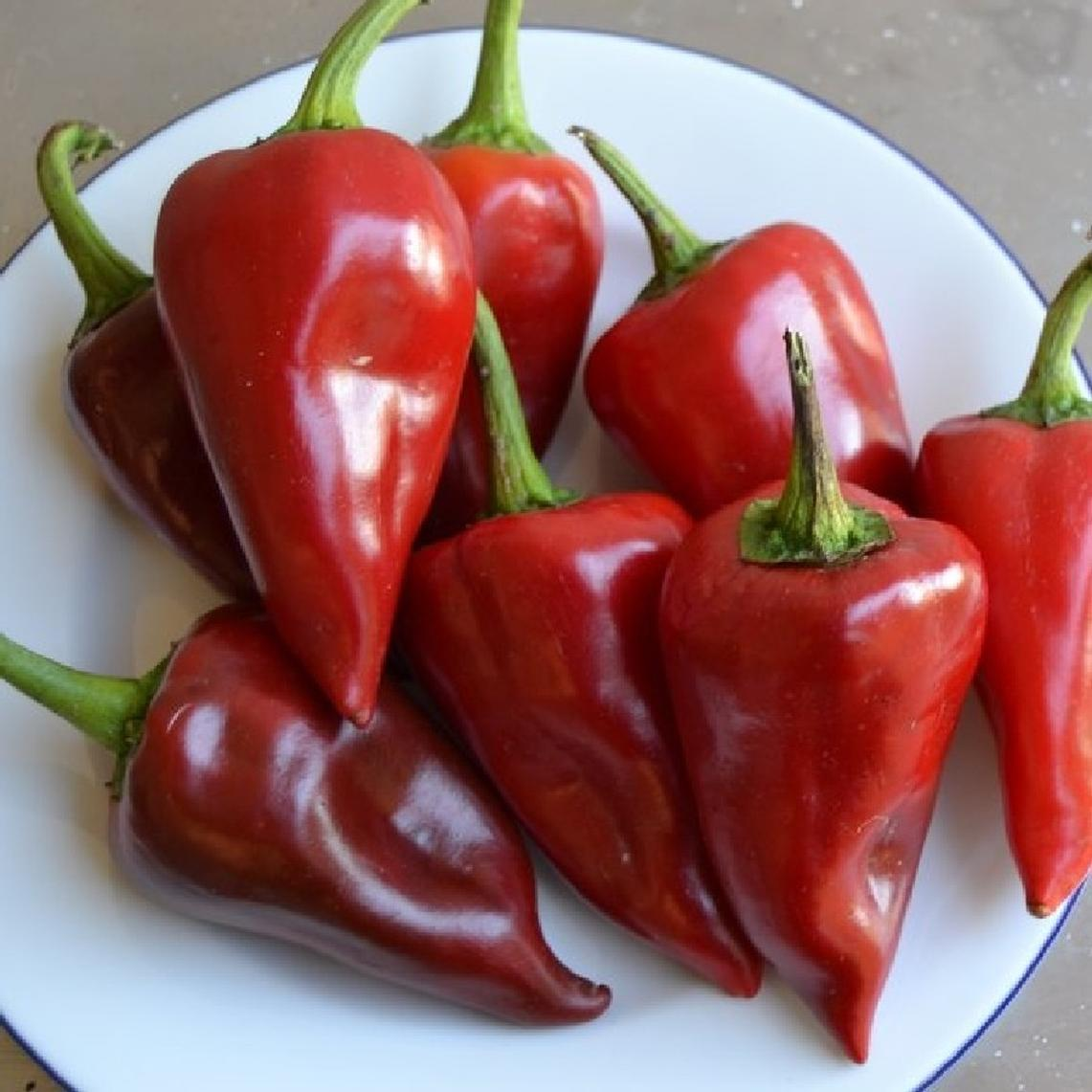 Hot Pepper Seeds - Piquillo