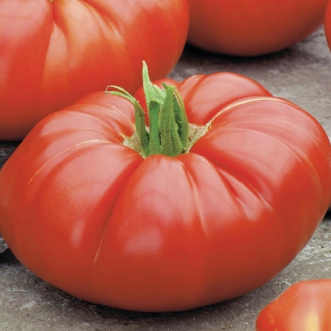 Tomato Seeds - Beefsteak (Determinate)