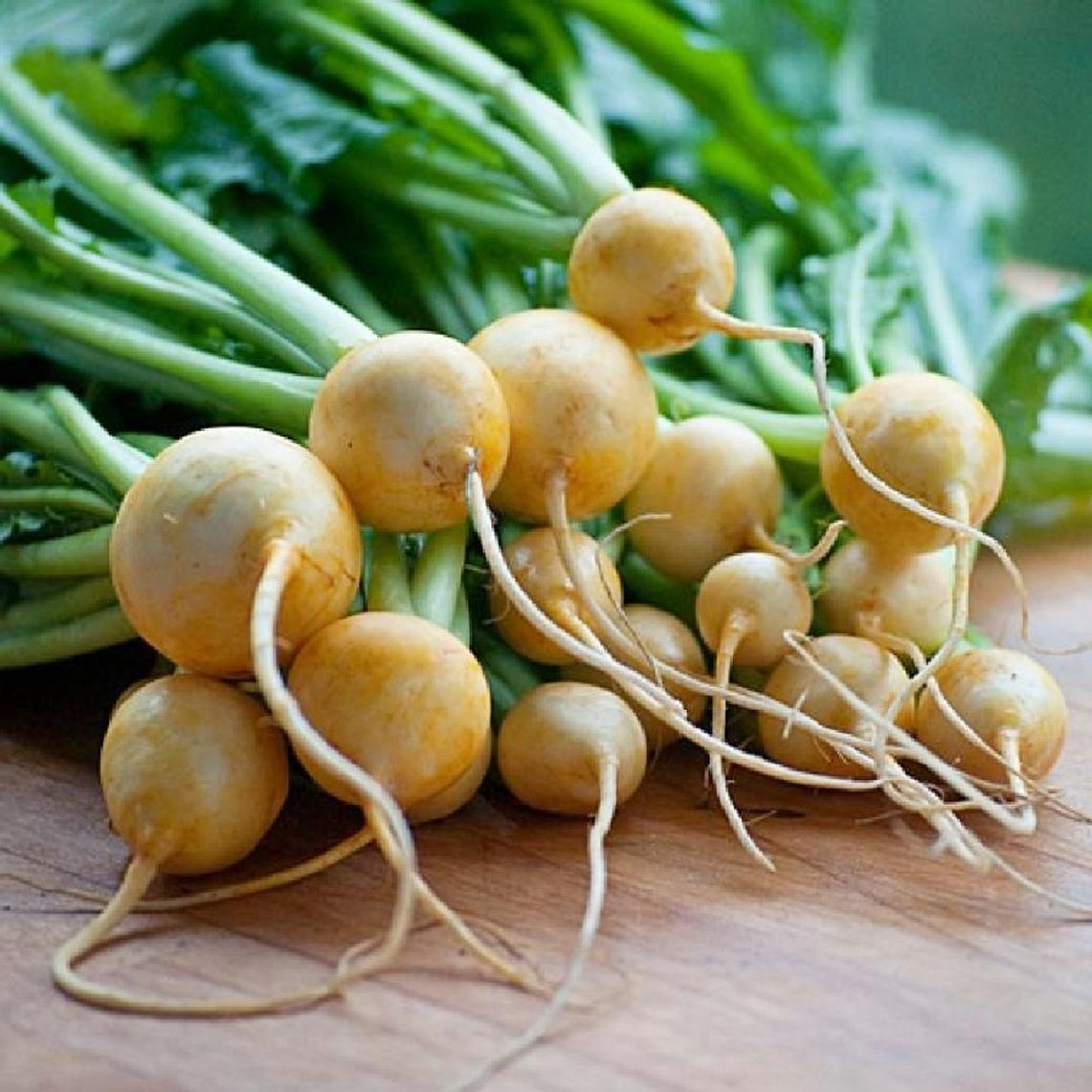 Turnip Seeds - Golden Ball