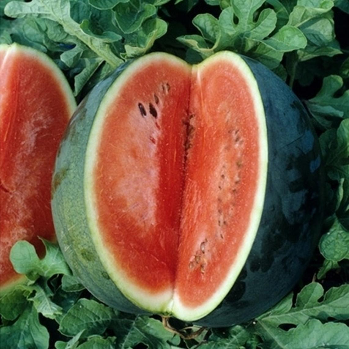 Watermelon Seeds - Florida Giant