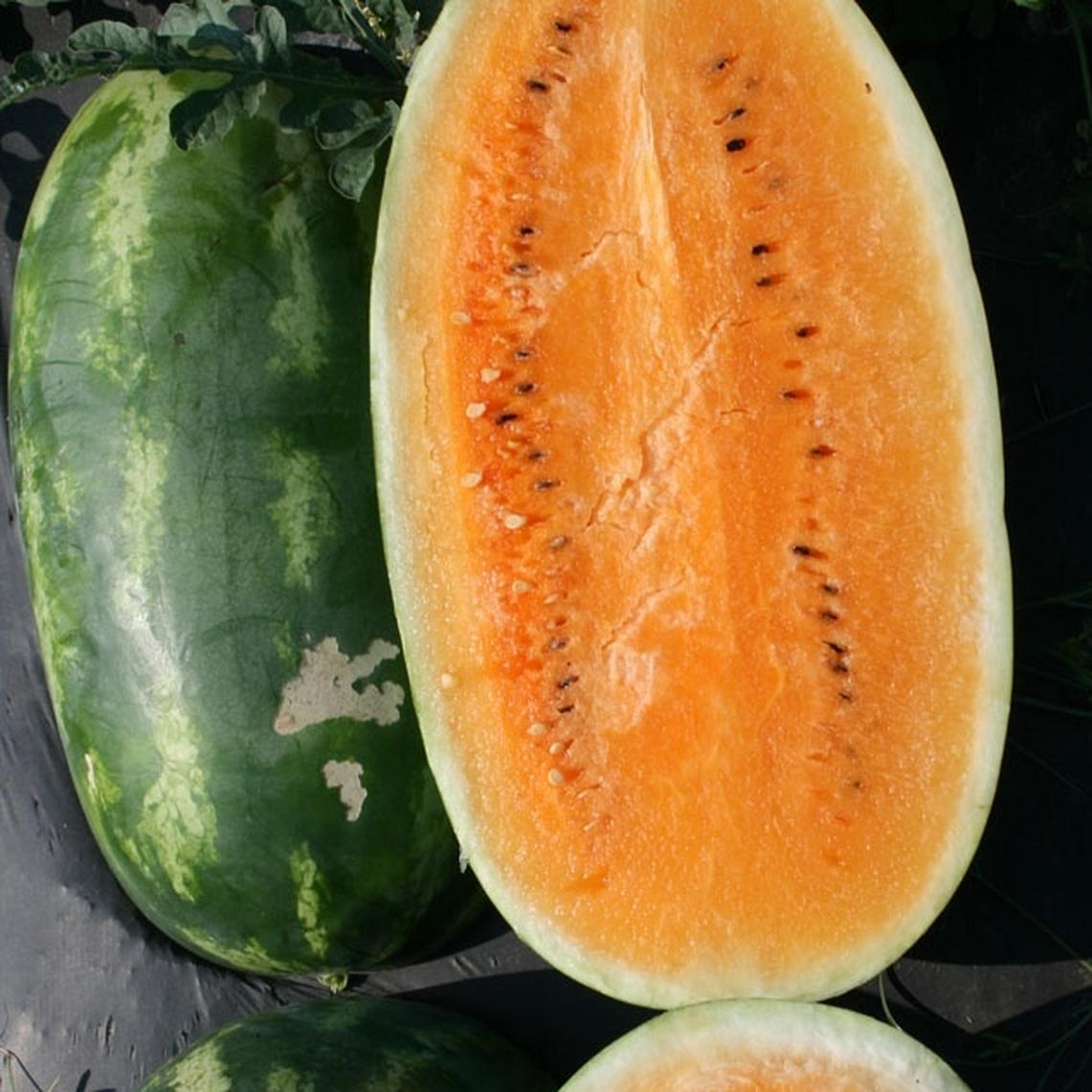 Watermelon Seeds - Tendersweet Orange