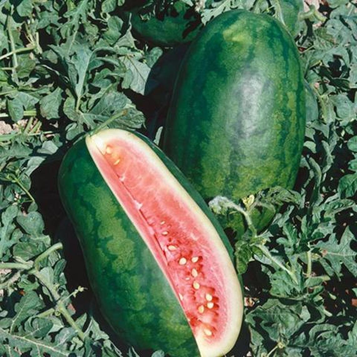 Watermelon Seeds - Congo