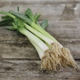Heirloom Leek Seeds