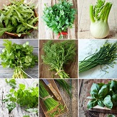Culinary Herb Collection